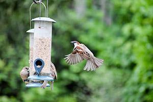 birdfeeder image